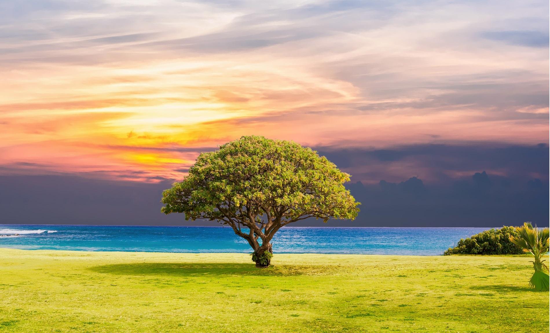 tree-2435269_1920